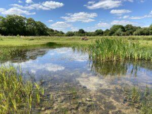 Cutteslowe Ponds